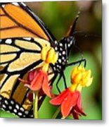 Monarch Pollination 1 Metal Print