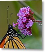 Monarch Purple Metal Print