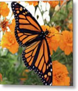 Monarch Series 1 Metal Print