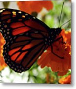 Monarch Series 8 Metal Print