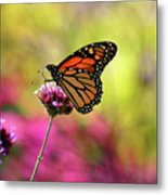Monarch Song Metal Print