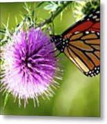 Monarch Thistle Metal Print