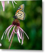 Monarched Coneflower Metal Print