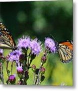 Monarchs And Blazing Star Metal Print