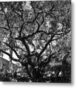 Monastery Tree Metal Print