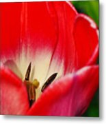 Monet Garden Red Tulip Metal Print