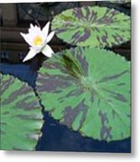 Monet Lilies White  Metal Print