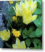 Monet's Fancy Tulips Metal Print by Kathy Yates