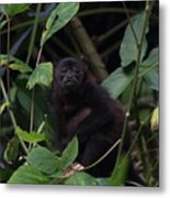 Monkey Face Metal Print
