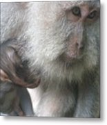 Monkey Mother 3 Metal Print