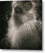 Monkey Portrait Metal Print