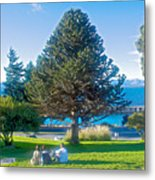 Monkey Puzzle Tree In Central Park In Bariloche-argentina  Metal Print