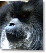 Monkey Stare Metal Print
