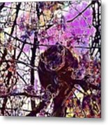 Monkey Tree Zoo Animals Nature  Metal Print
