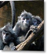 Monkey Trio Metal Print