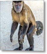 Monkey_0726 Metal Print