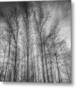 Monochrome Sunset Trees Metal Print
