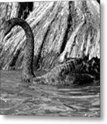 Monochrome Swimming Black Swan Metal Print