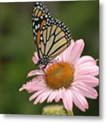 Monorch Butterfly Metal Print