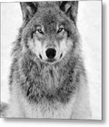 Monotone Timber Wolf  Metal Print