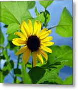 Monsoon Sunflower Metal Print