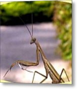Monster Mantis Metal Print