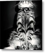 Monty Our Precious Cat Metal Print