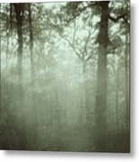 Moody Foggy Forest Metal Print