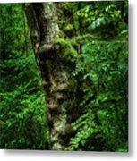 Moody Tree In Forest Metal Print
