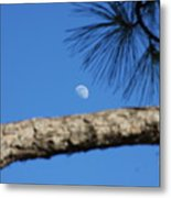 Moon On A Pine Bough Metal Print