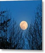 Moon Rising In The Trees Metal Print