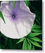 Moonflower Metal Print