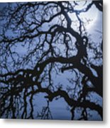 Moonlight And Oak Tree Metal Print