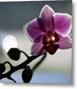 Moonlight And Orchid Metal Print