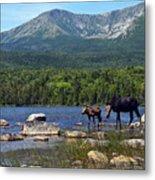 Moose Baxter State Park Maine 2 Metal Print