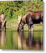 Moose Country Metal Print
