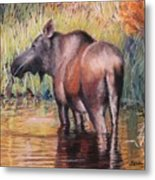 Moose In Alaska Metal Print by Terri Thompson