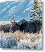 Moose In Cold Winter Ice Metal Print