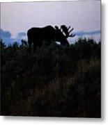 Moose In Silhouette Metal Print