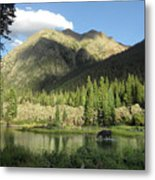 Moose In The Elk Creek Beaver Ponds Metal Print