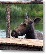 Moose In The Pond Metal Print