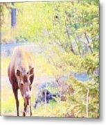 Moose In The Yard Metal Print