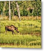 Moose Meadows Metal Print