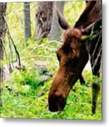Moose Munching Metal Print