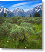 Moran Meadows Metal Print