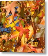 More Autum Leaves Metal Print