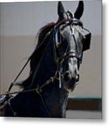 Morgan Horse Metal Print