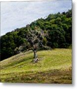 Morgan Territory Oak Metal Print