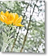 Morning By Morning Metal Print