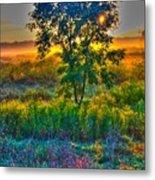Morning Color-4 Metal Print